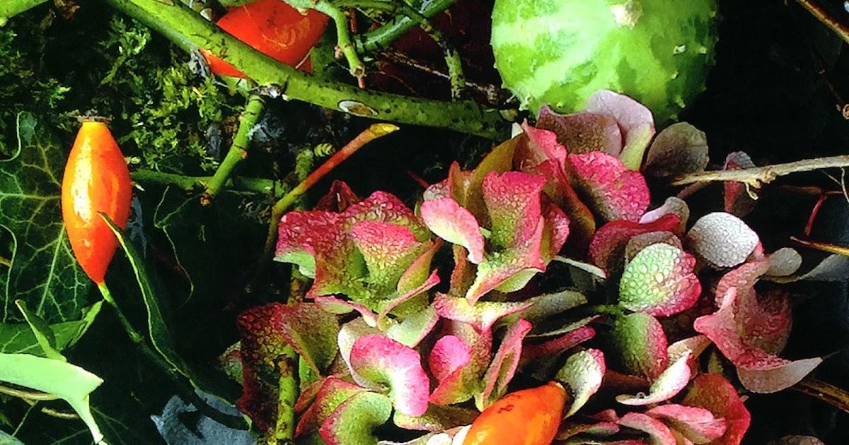 Profumeria botanica al SANA 2016