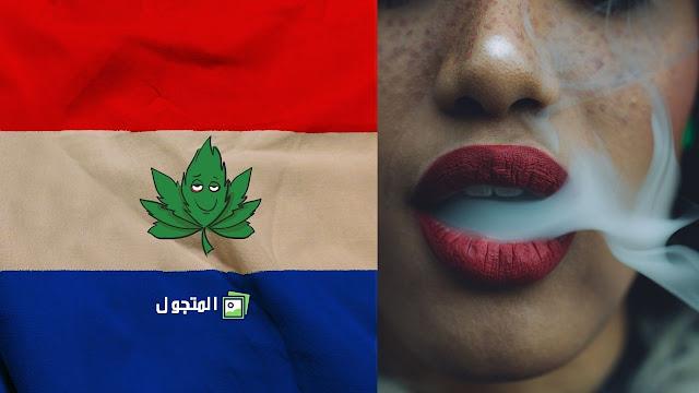 تدخين الماريجوانا في هولندا (مقاهي الحشيش)