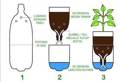 cara menanam hidroponik dengan botol bekas