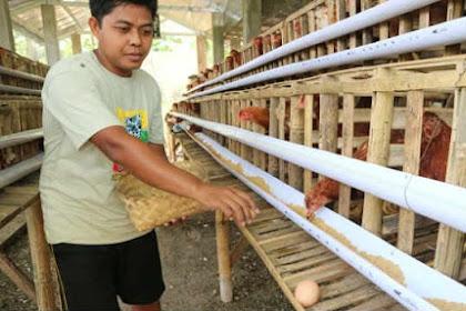 Atasi Harga Anjlok, Kemendag Imbau Peternak Bagikan Ayam Gratis, Netizen: Bapak Masuk Kandang Dulu