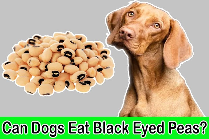 Can Dogs Eat Black Eyed Peas | Are Black Eyed Peas Good for Dogs