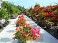 Qgardens a garden heaven on Cyprus