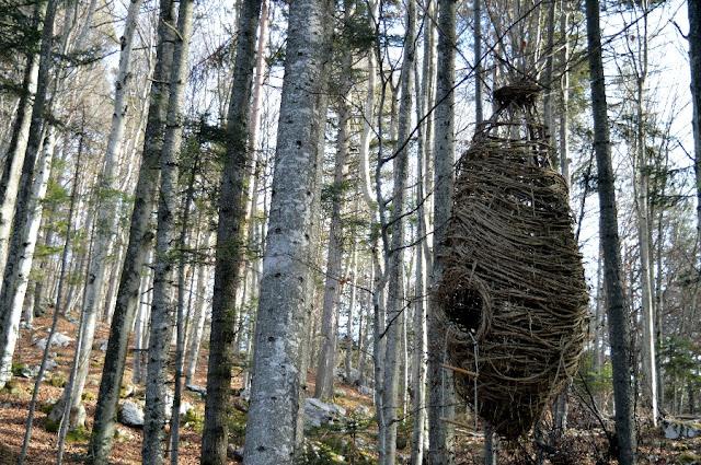 il respiro degli alberi