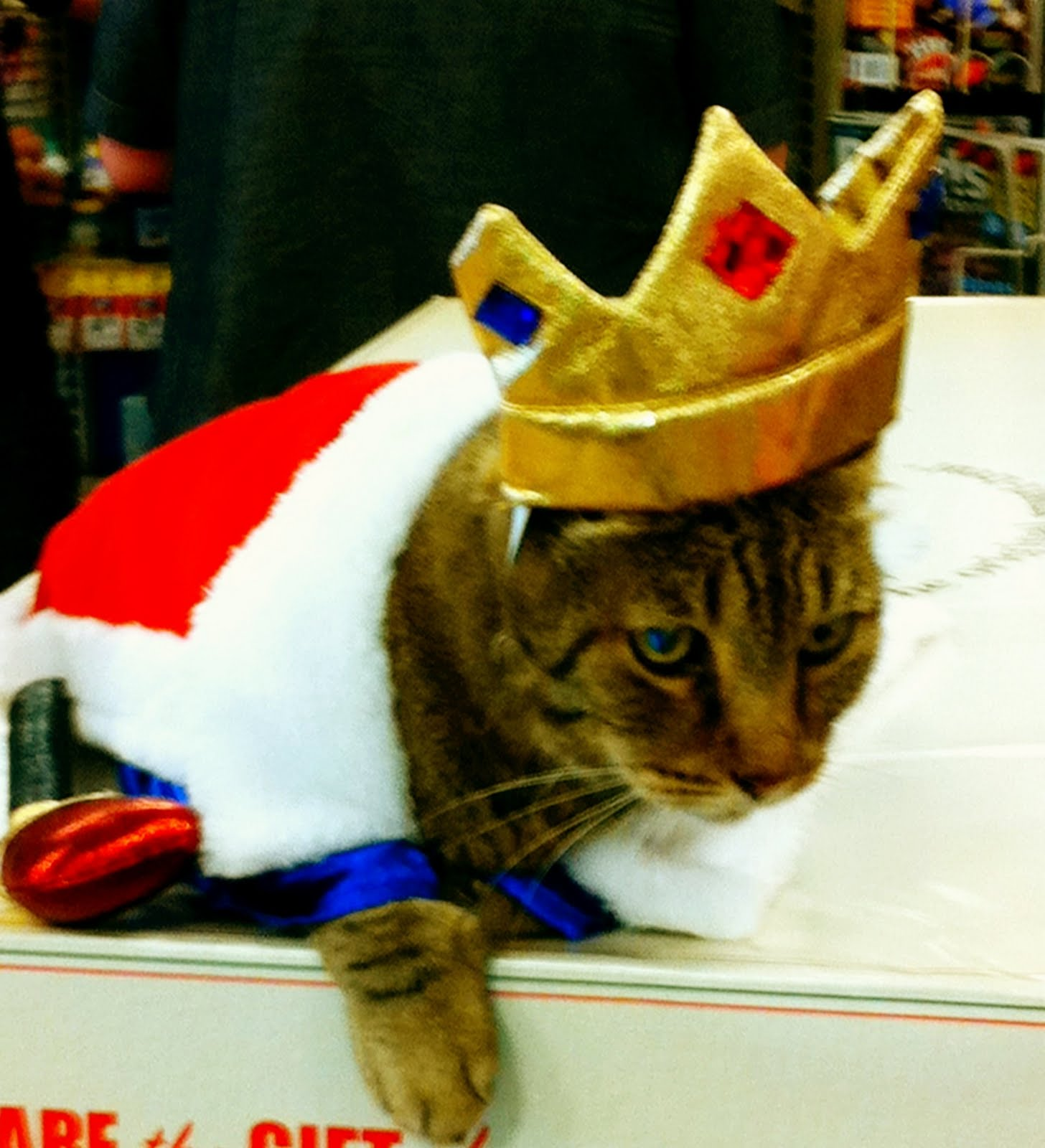 funny cat dressed up - photo #13