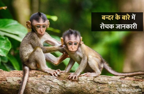 about-monkey-in-hindi-essay