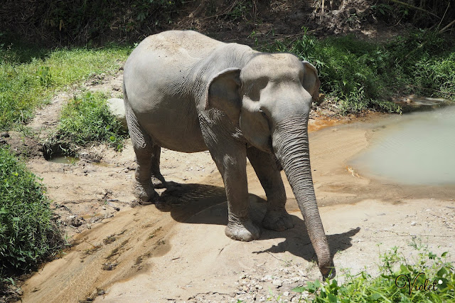 Thailand elephant ethical