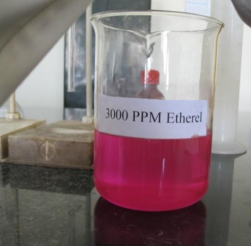 Ethylene: Properties and Antagonist