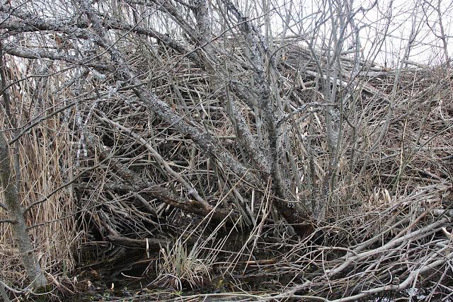 национальный парк Соомаа, сплав на байдарках, Soomaa national park, бобровая хатка