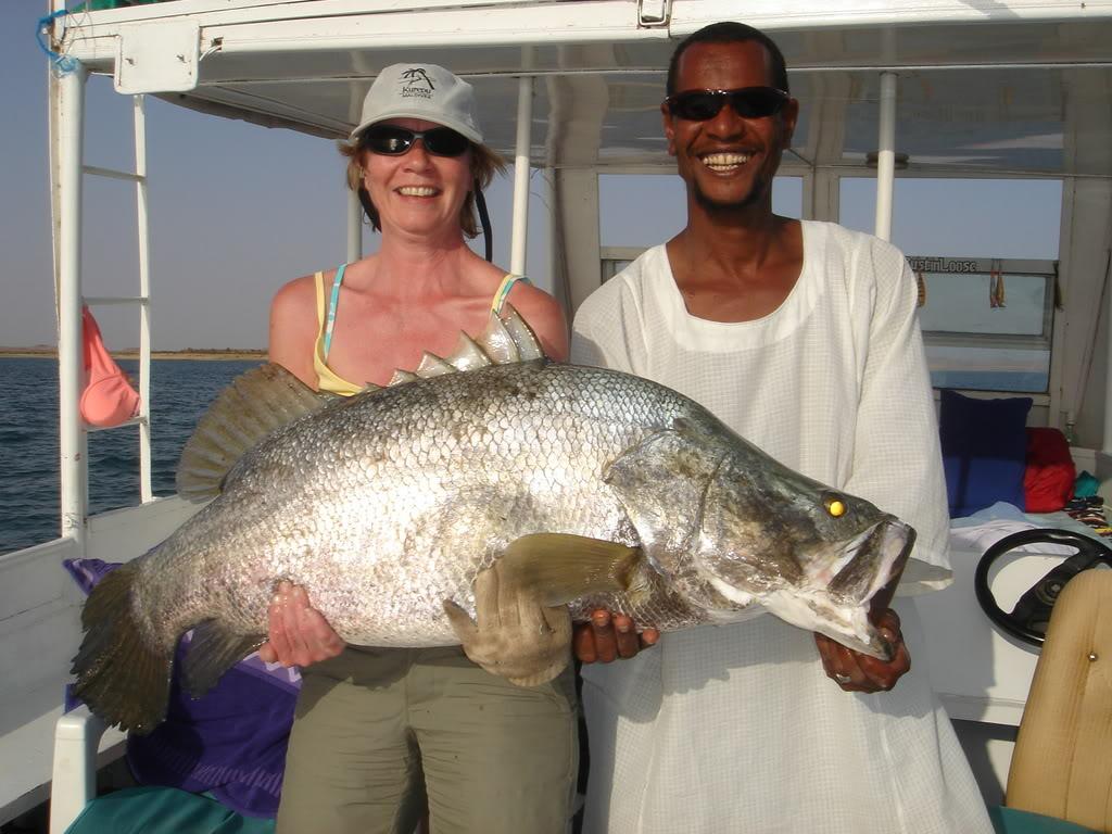 Captured big Nile perch.