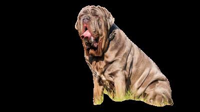 The 10 Blacklisted Dog Breeds Dog Breed Info