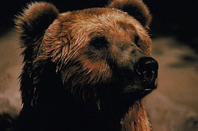 bearish