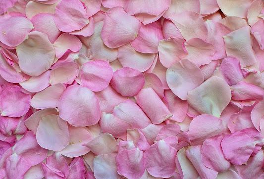 أحلى الورود ورق حائط 12