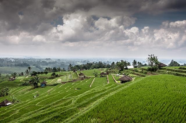 مزارع الأرز جاتيلويه