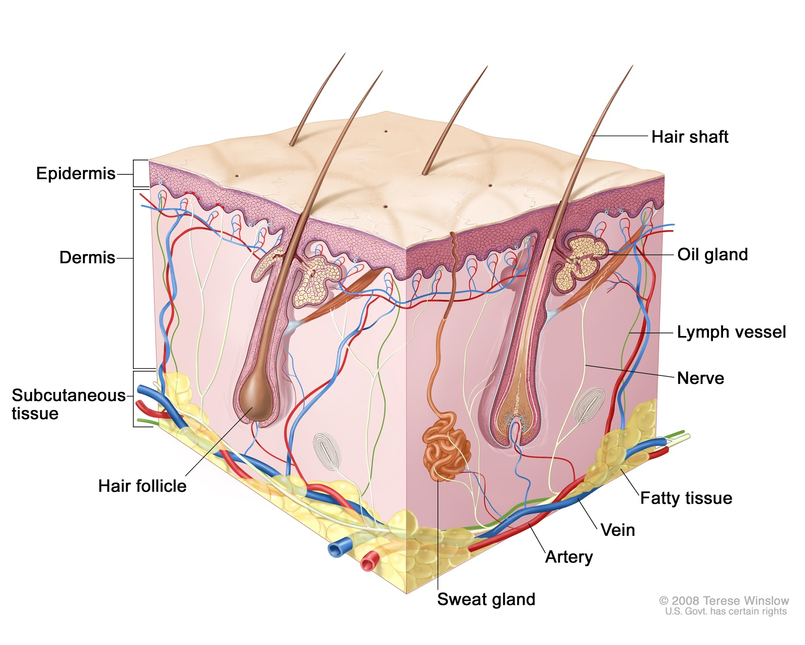 medium resolution of all about skin care