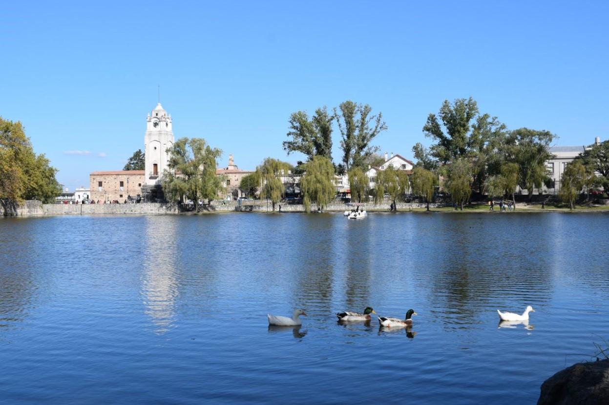 lago com patos nadando