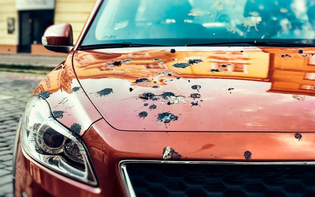 Comment nettoyer les fientes d'oiseaux de votre voiture