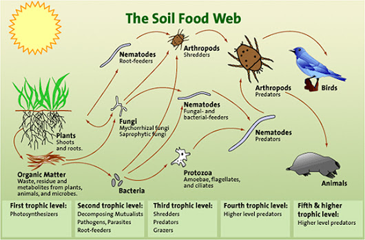 The Soil Foodweb
