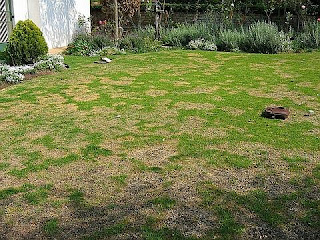 Lawn Burn From Dog's Urine