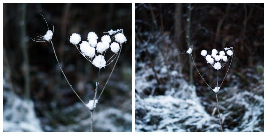 Blog + Fotografie by it's me! - Winter für einen Tag - Collage einer verschneiten Wilden Möhre