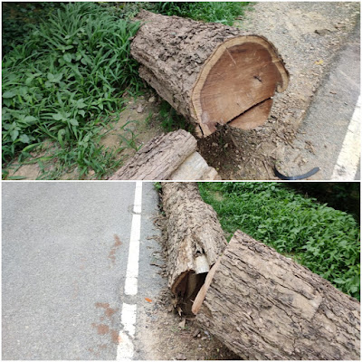Trees Cutting For Wood Govt Officials Silent Uttar Pradesh News In Hindi