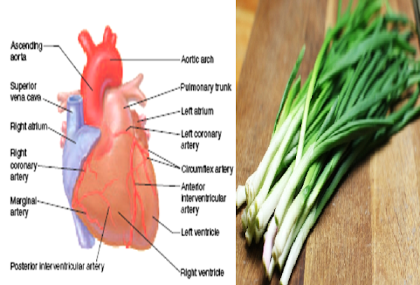 5 OUTSTANDING BENEFITS OF ONION LEAVES FOR HEALTH