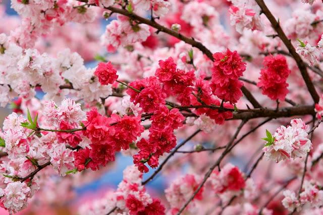 ازهار جميلة بألوان متنوعة