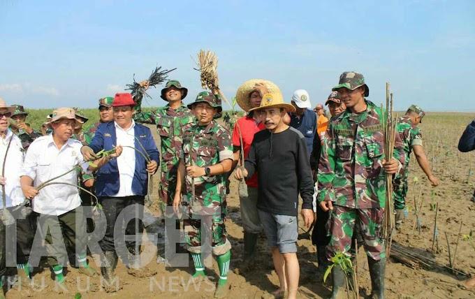 Soliditas TNI, Kodim Pati Bersama Forkompimda Tanam 5000 Bibit Mangrove di Pesisir Pantai Kertomulyo