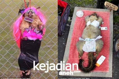 Festival Hewan yang Aneh Di Dunia Aneh Di Dunia, Kontes Mayat Hewan Di New Zealand