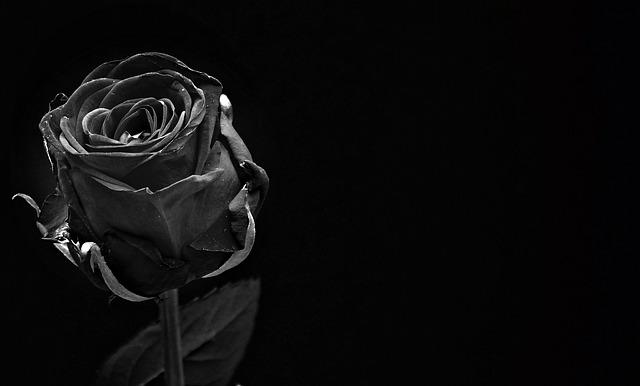 hoa hong den co y nghia gi
