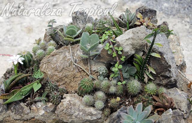 Arreglo de suculentas con demasiadas plantas en muy poco espacio; en algunos meses comenzarán a observarse efectos negativos