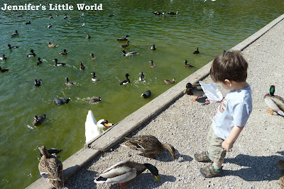 Swanbourne Lake near Arundel feeding the ducks