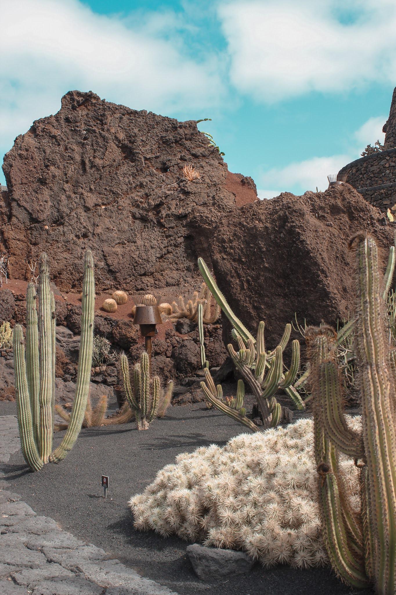 que-ver-lanzarote-jardín-de-cactus-cesar-manrique
