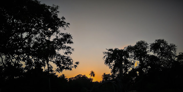 AfterNoon Sunset Photography Behind Trees | From'S Photography
