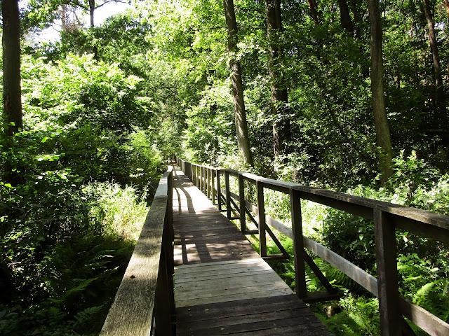 drewniana kładka, Nadleśnictwo Parczew, Leśnictwo Jedlanka, ścieżka edukacyjna