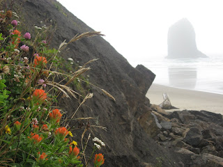 Wildflowers sprouting from the rocky shore on Gannon Beach, Oregon. There is a boulder-island in the background.