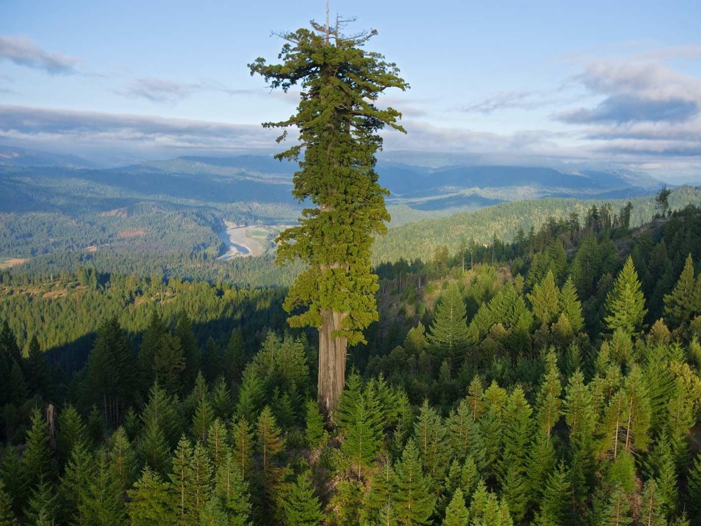 Alberi Ad Alto Fusto Quali Sono il gusto della natura: quali sono i record tra le piante?