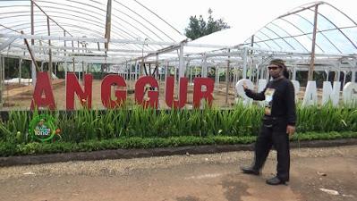 FOTO : Taman Anggur O&i Farm Subang
