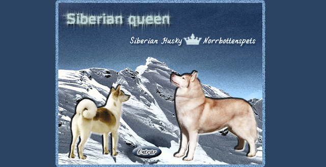 Portada Pagina Web Siberian Queen