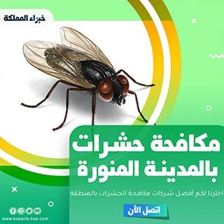 شركة مكافحة حشرات بالمدينة المنورة - خصم 15% رش حشرات بالمدينة