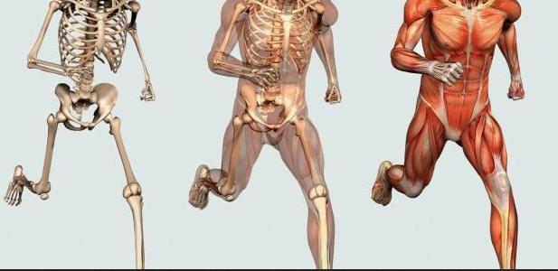 معلومات طبية عن العظام
