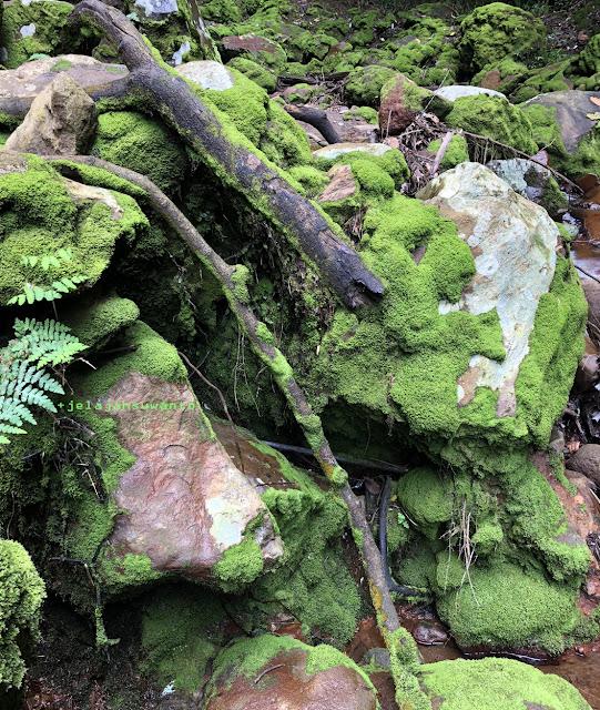 Kerajaan lumut di Curug Badak Batu Hanoman Tasikmalaya || JelajahSuwanto