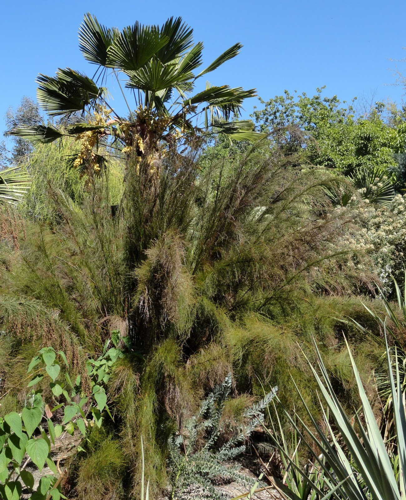 danger garden: The Kuzma Garden, a late May visit