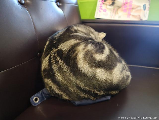IMG 9165 - 台中北區│樂珈琲 Tano CAFE,隱藏在中友百貨後方的老宅咖啡,還有可愛店貓超療癒!