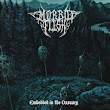 MORBID FLESH (Spain) - Embedded In The Ossuary (April 15, 2014)
