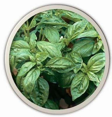 medicinal plants of kashmir pdf