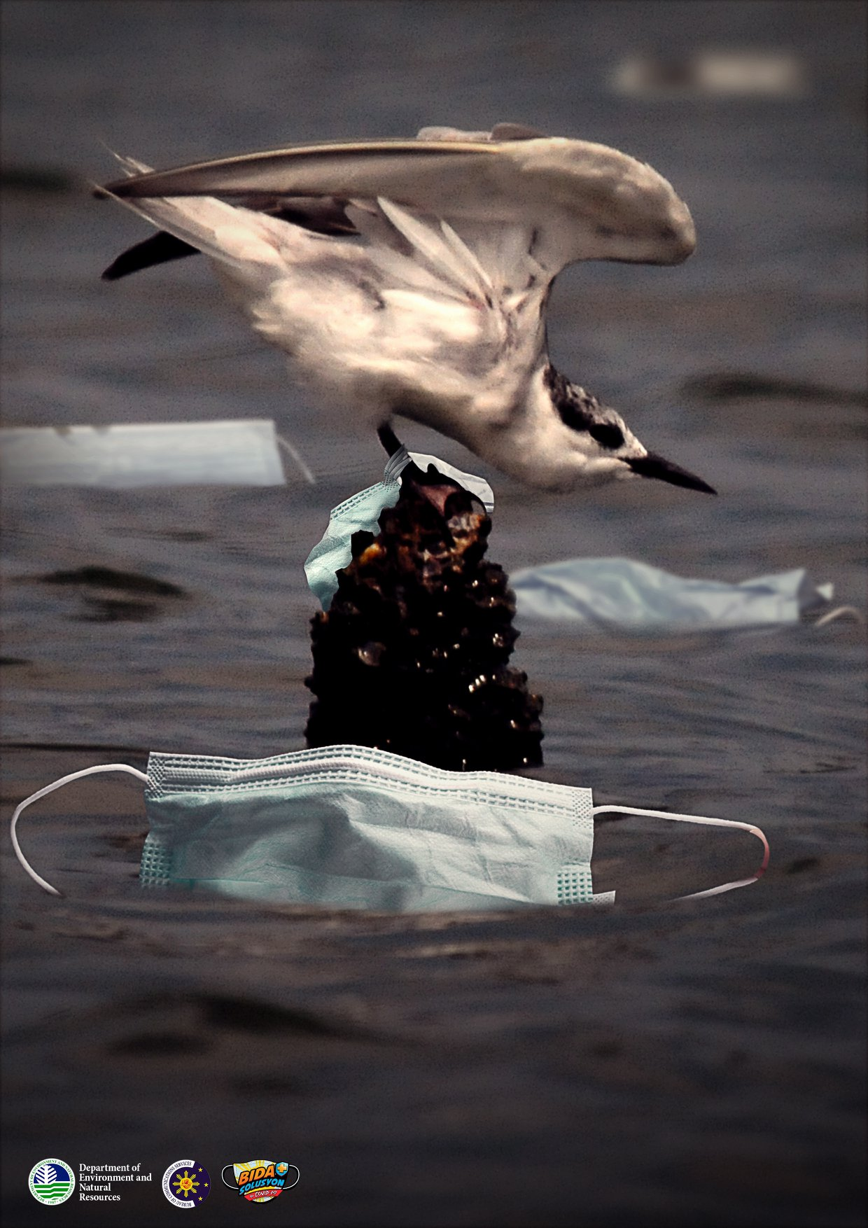 birds become entangled with trash like discarded used face mask