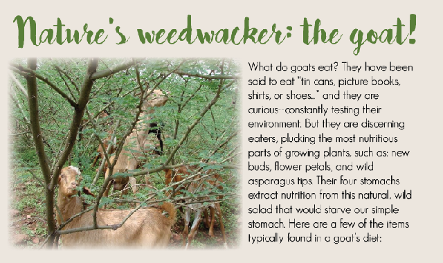 Nature's Weedwacker: The Goat! #infographic