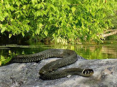 Lha_da_Queimada_Grande,snake-grass-snake-nature-lake,most_dangerous_tourist_destinations_in_the_world_most_dangerous_tourist_places_in_the_world