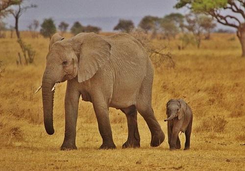 Filler Hakkında Bilmedikleriniz