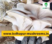 Buy all types of mushroom spawn in ambelim goa